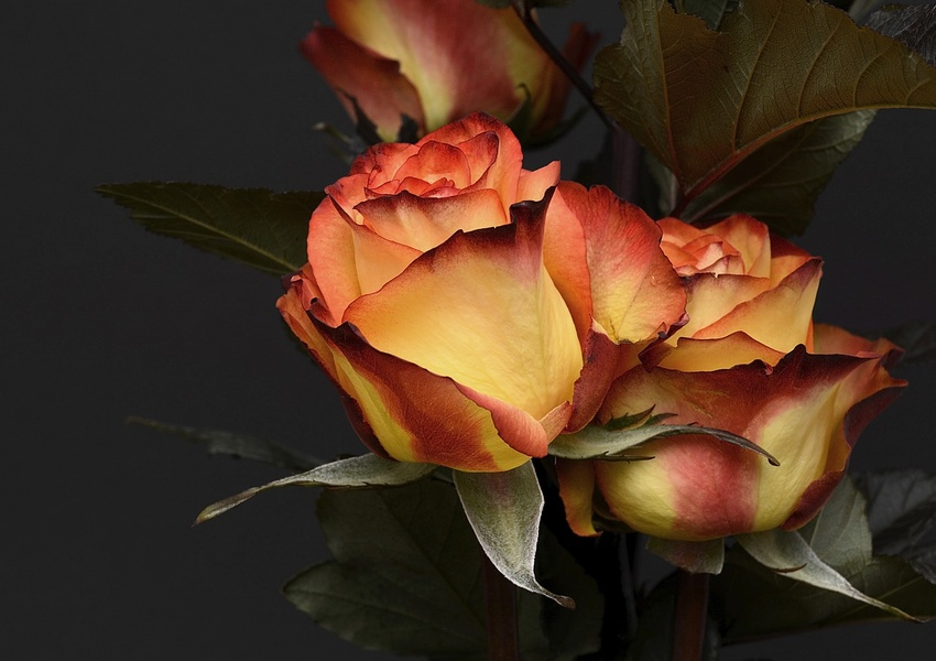 The Most Expensive Flowers in the World: Three Varieties You Should Know