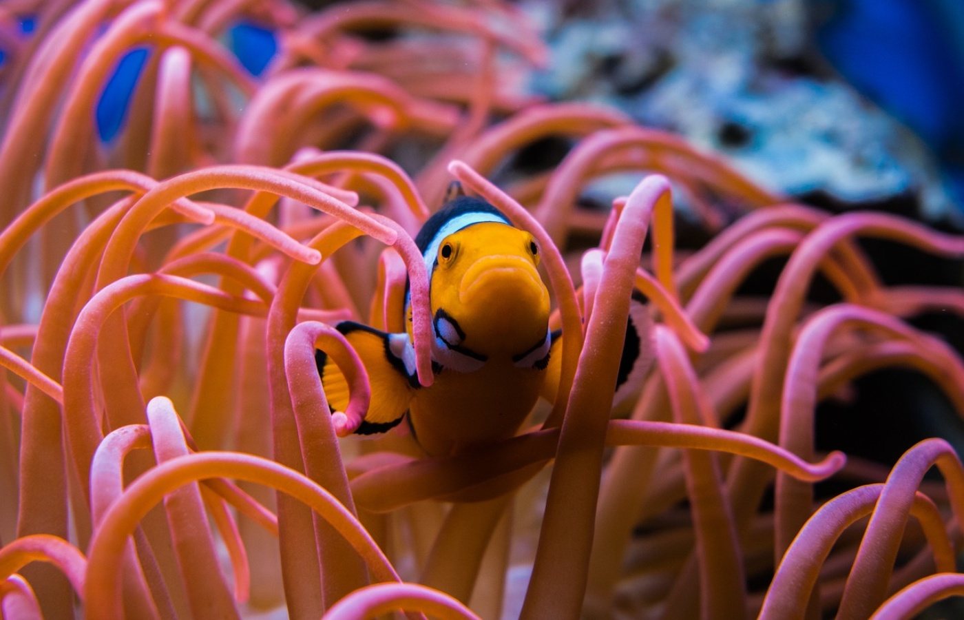 The Most Expensive Coral and Why It\'s So Valuable   Monocle Life
